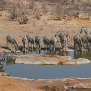 Wasserstelle Zebras, Namibia
