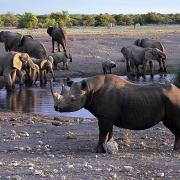 Wasserstelle Nashorn, Namibia