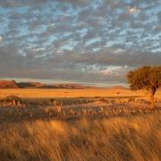 Graslandschaft Namibia